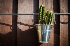 Cactus dans le seau en métal Photographie stock libre de droits