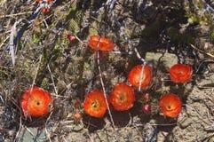 Cactus dans le wildness en Amérique Photo stock