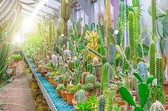 Cactus dans les déserts tropicaux de l'Amérique du Nord image libre de droits