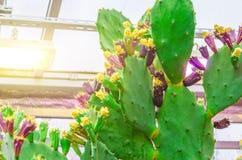 Cactus dans les déserts tropicaux de la fin de l'Amérique du Nord  image stock