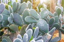 Cactus dans les déserts tropicaux de la fin de l'Amérique du Nord  photos stock