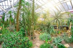 Cactus dans les déserts tropicaux de la serre chaude de l'Amérique du Nord image libre de droits