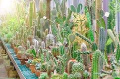 Cactus dans les déserts tropicaux de la serre chaude de l'Amérique du Nord image stock