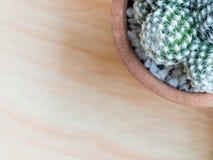 Cactus dans mis dessus une table en bois brun clair Image stock