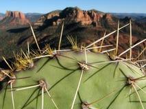 Cactus dans Sedona Photos stock