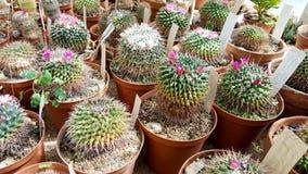 Cactus dans Sofia Botanical Garden photo stock