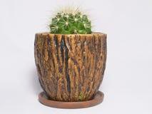 Cactus dans un bac de fleur Image stock