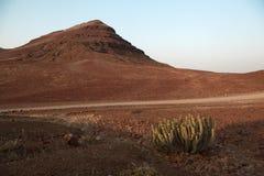 Cactus dans un horizontal de désert Images stock