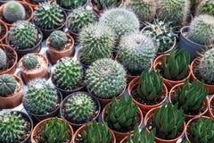 Cactus dans un pot Photos libres de droits