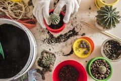 Cactus dans un pot sur la forme Photos stock