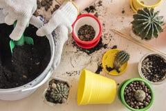 Cactus dans un pot sur la forme Photo libre de droits