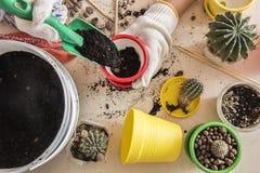 Cactus dans un pot sur la forme Images libres de droits
