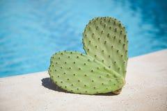 Cactus dans une forme de coeur par le regroupement Images libres de droits