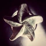 Cactus de Astronphyton Fotos de archivo