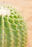 Cactus de baril d'or. Photographie stock libre de droits