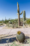 Cactus de baril d'hameçon - parc national de Saguaro - AZ Photographie stock libre de droits