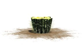 Cactus de baril simple illustration stock