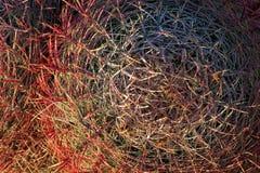 Cactus de barril Imagen de archivo libre de regalías