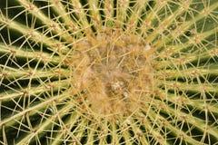 Cactus de barril Fotos de archivo libres de regalías