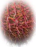 Cactus de barril del gancho de pescados fotografía de archivo libre de regalías