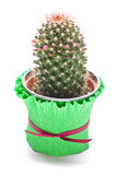 Cactus in de bloempot Stock Foto