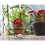 Cactus de coeur d'usine d'amour de valentines Image stock