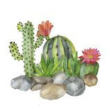 Cactus de composition en illustration avec des pierres Image stock