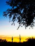 Cactus de coucher du soleil image stock