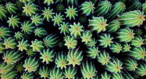 Cactus de désert d'étoiles de mer image stock
