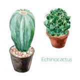 Cactus de Echinocactus con la pintura de la acuarela del pote en el backgr blanco Foto de archivo libre de regalías