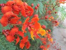 Cactus de floraison, désert de l'Arizona Image libre de droits