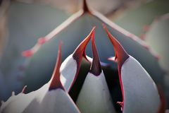 Cactus de l'Arizona images libres de droits