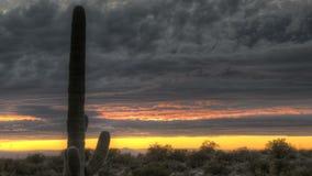 Cactus de l'Arizona de coucher du soleil de HDR Timelapse banque de vidéos
