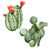 Cactus de la acuarela stock de ilustración