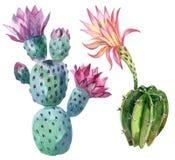Cactus de la acuarela Imagen de archivo libre de regalías