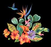 Cactus de la acuarela, flores tropicales, colibrí libre illustration