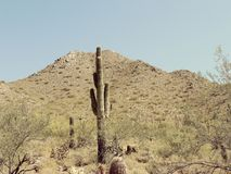 Cactus de la colina Fotos de archivo libres de regalías