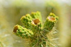 Cactus de la flora del desierto con las espinas dorsales agudas imagen de archivo