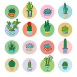 Cactus de la historieta del vector y sistema suculento del icono stock de ilustración