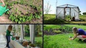 Cactus de la mujer, flores, habas y plantas de tomate de riego collage metrajes