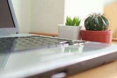 Cactus de la oficina Imagen de archivo libre de regalías