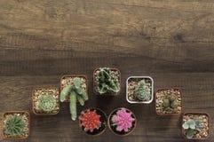 Cactus de la visión superior en fondo de madera Imagenes de archivo