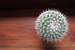 Cactus de Mammillaria sur le fond en bois avec le topview Image libre de droits