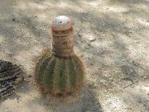 Cactus de melon images stock