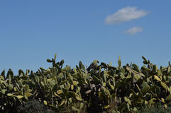 Cactus de paysage Images libres de droits