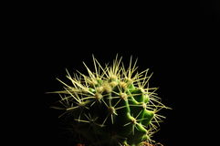 Cactus de Persoal Imagen de archivo