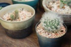Cactus in de pot Stock Afbeeldingen