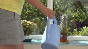 Cactus de riego femenino en el invernadero del jardín botánico interior 4K metrajes