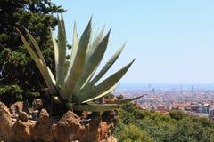 Cactus in de rotsen. Stock Foto's