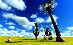 Cactus de Saguaro Photos libres de droits